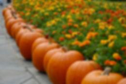 pumpkin-2868748_1920.jpg