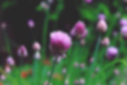 chives-1407364_1920.jpg