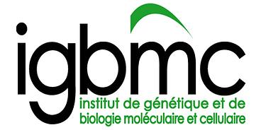 igbmc.png