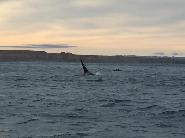 whale pc.JPG
