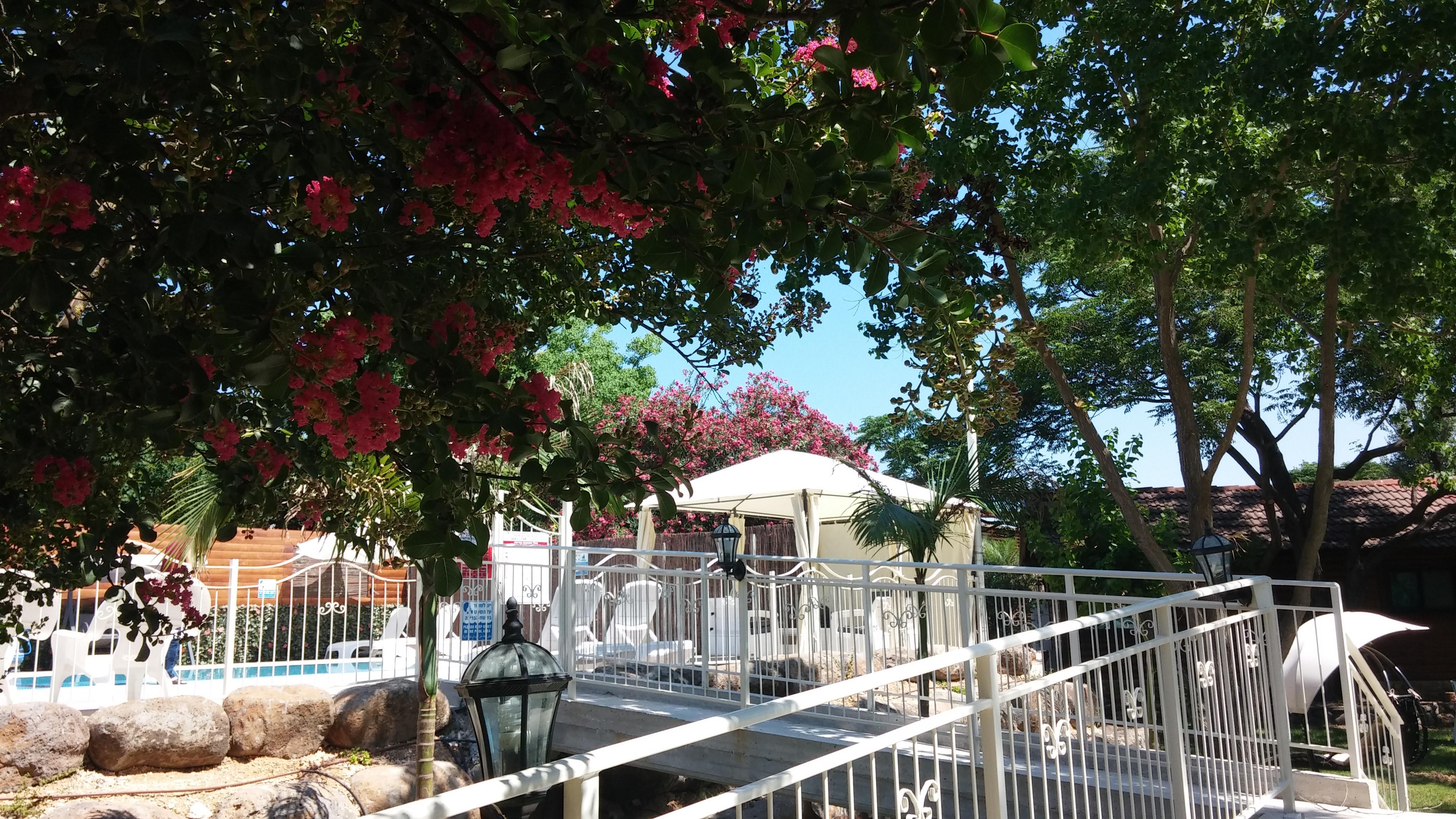 Pool bridge with Gazebo and blossom