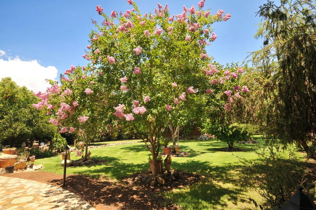 פריחה אביבית בקידמת הגליל