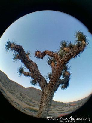 Joshua Tree Natl. Park (with fisheye lens)