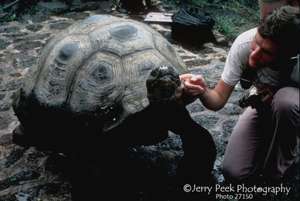 Giant tortoises like neck scratches! Darwin Institute, Galapagos