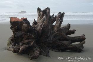 Driftwood after a storm - Meyers Beach, Oregon