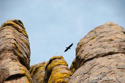 Rock pinnacles and bird, Chiricahua Natl. Monument, Arizona
