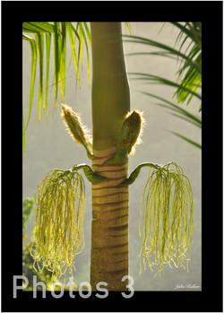 3-palmier pinot