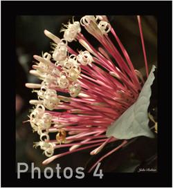 4-arbre coton tige