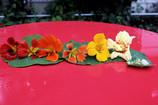 Poor mans capers & dolmas: lacto-fermented nasturtium seeds & leaves