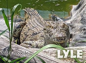 Lyle copy.jpg