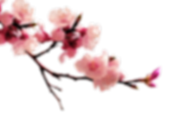 kisspng-peach-blossom-flower-plum-flower