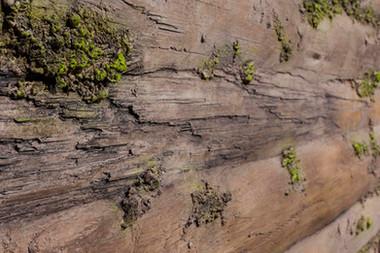 Baobab Moss