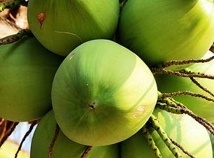 Coconuts-1333x687.jpg