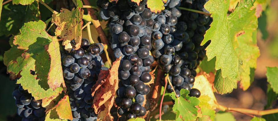 Bordeaux et le changement climatique