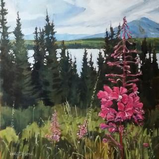 Yukon Fireweed SOLD