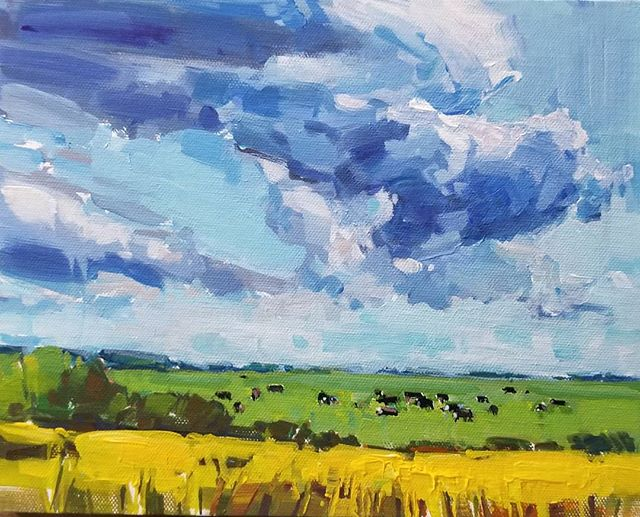 Canola and Cows