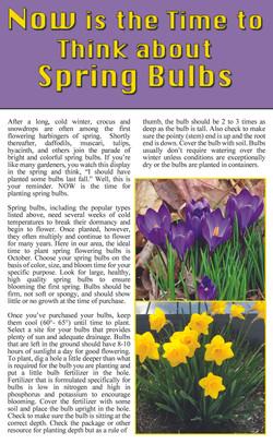 Spring Bulbs page 1