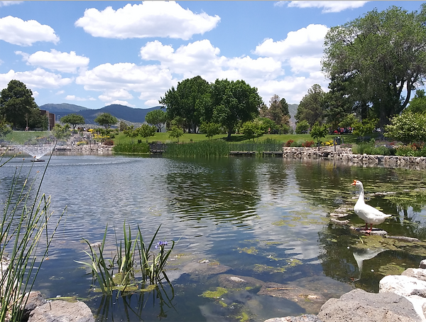 My duck at Ashley Pond.png