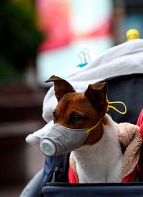 doggy in mask.jpg