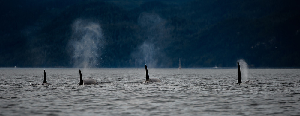 planet protector conservation environment marine mammals