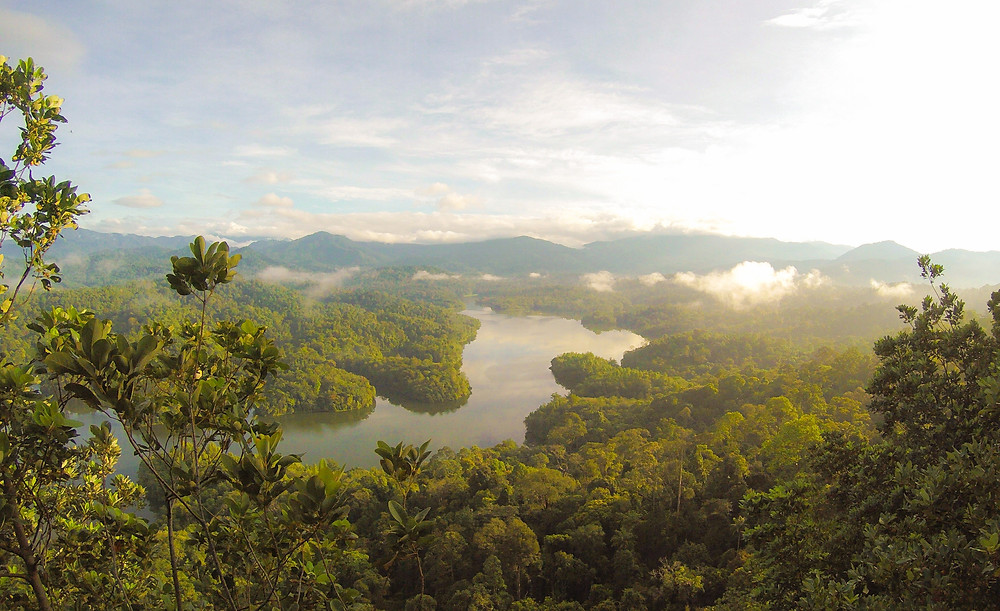 Rainforest environment advocacy sustainable planet