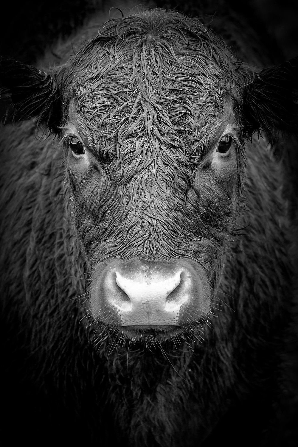 Planet Protector Cattle Ranching environment advocacy