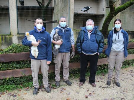 """Le """"Rocher des Aigles"""" a vacciné contre la grippe aviaire"""