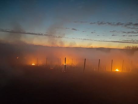 Les viticulteurs amadouriens protègent leurs vignes