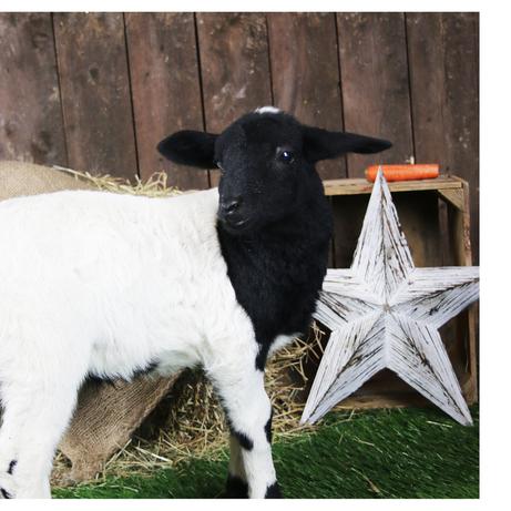 Sheep 4 x 4.png