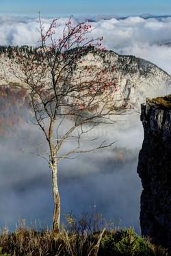 Baum mit Aussicht