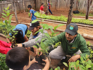 Guayakí Yerba Mate: Market-Driven Regenerative Agriculture at the Base of the Pyramid