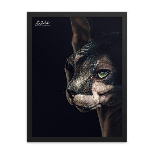 NEW Sphynx Cat/Kitten Portrait Framed Poster 2020/2021
