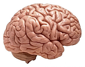 Human Brain: Facts, Functions & Anatomy.