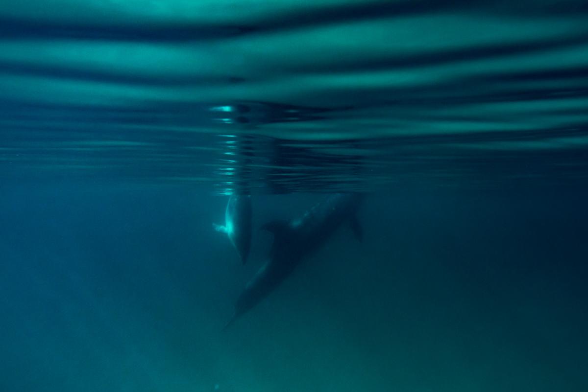 Dolphin peace