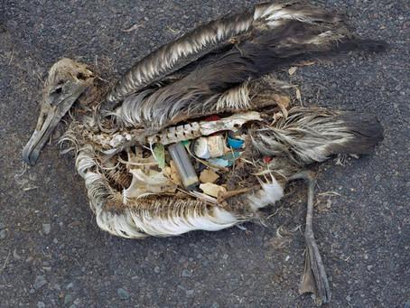 Wat iedereen moet weten over Zwerfafval en het Plasticprobleem