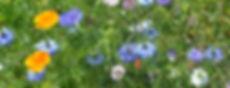 Veldbloemen-1024x391.jpg