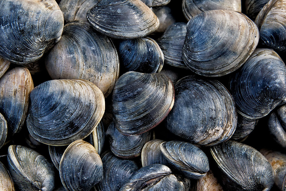 clams-background.jpg