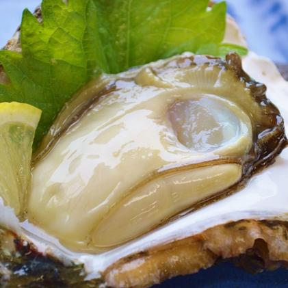 鳥羽浦村産岩牡蠣