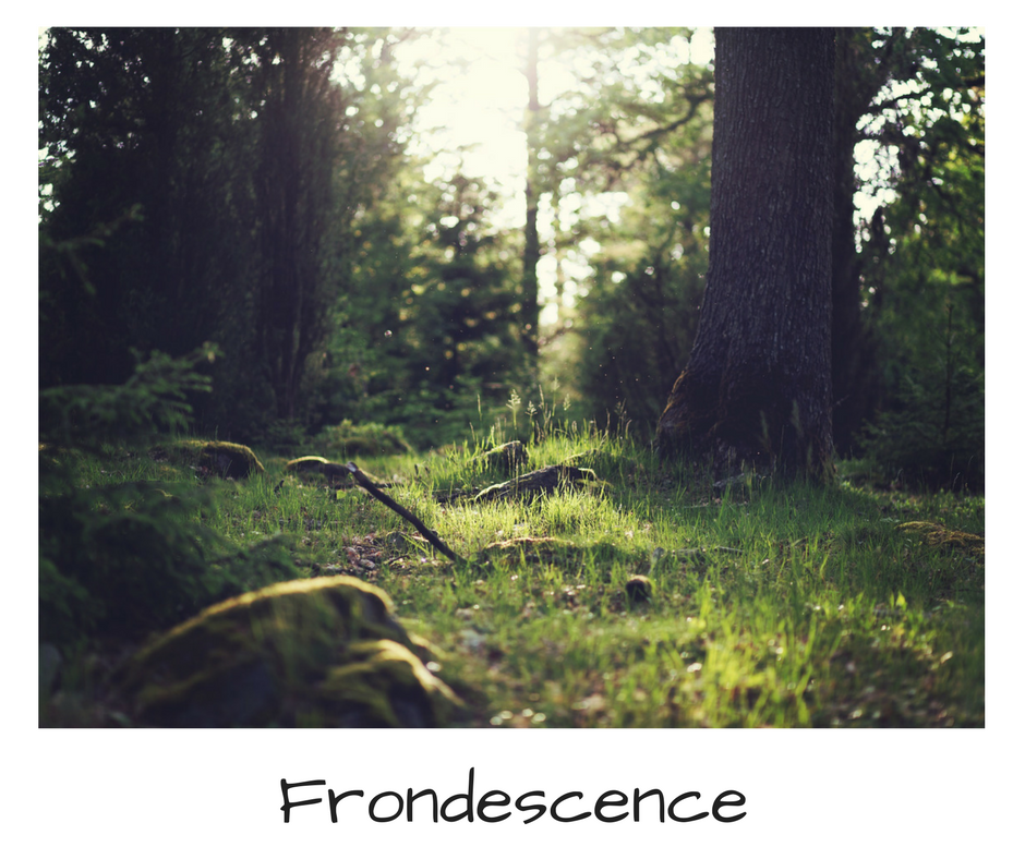 Six Sentence Fiction - Frondescence