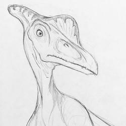 Pterosaur Sketch