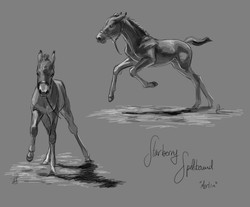Foal Sketches