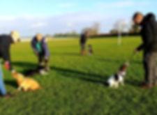 puppyfield1.jpg