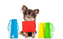 chihuahua dog holding a shopping bag rea
