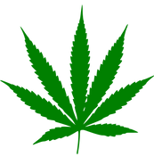 Cannabis (21).png