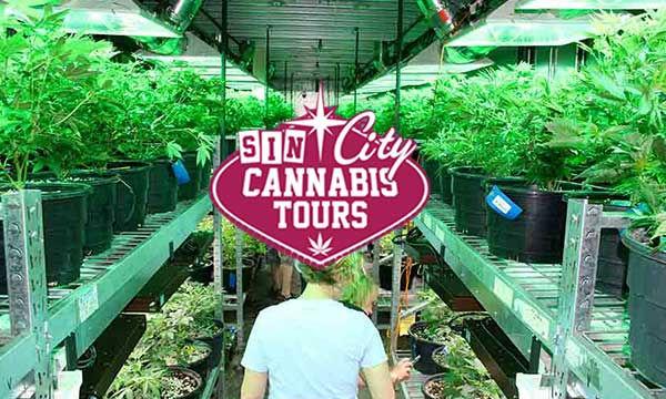 vegas-cannabis-tours-grow.jpg
