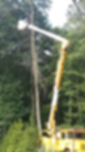 All Season Tree and Bucket Truck Service, a fully insured professional tree care company, provides peace of mind when working around your home or business.