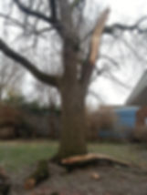 All Season Tree and Bucket Truck Service, a fully insured professional tree care company, provides peace of mind when working around your home or business.  672-1216