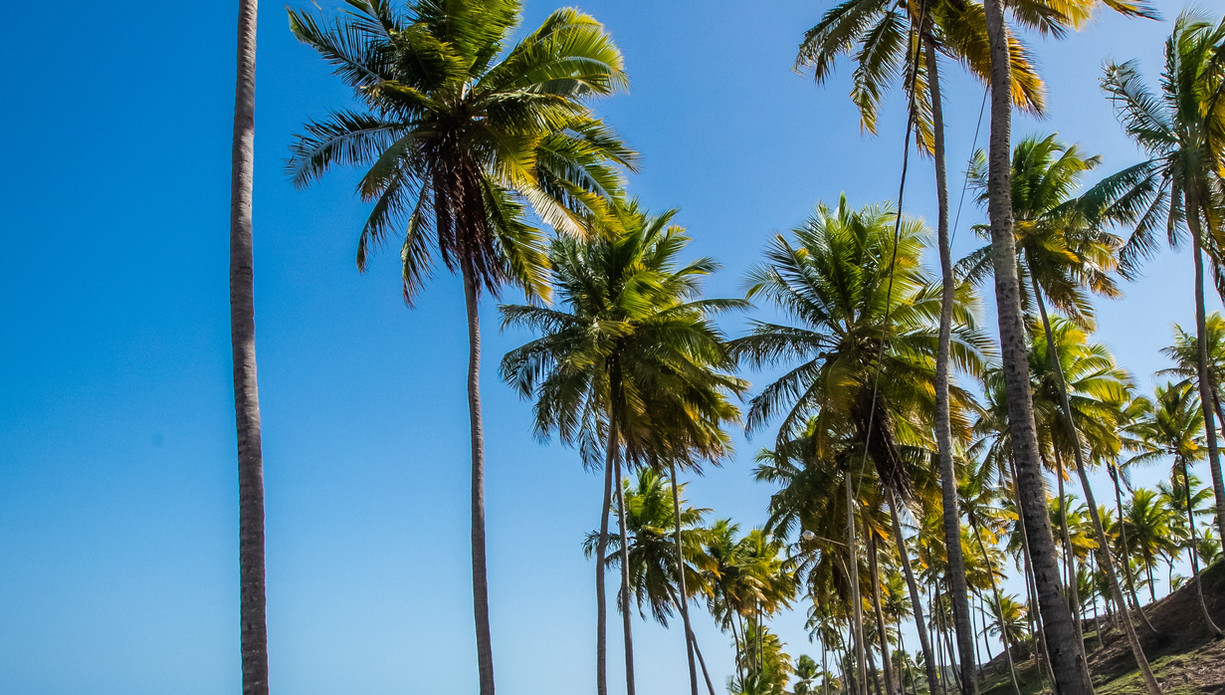 palm-trees-on-beach-shore-3801091.jpg