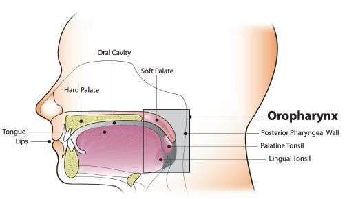 Diagram of Oral Cavity and Oropharynx