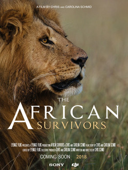 THE AFRICAN SURVIVORS
